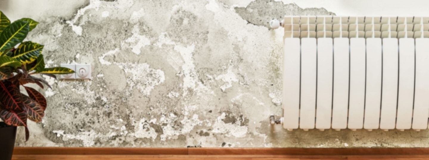 San Diego Bathroom Mold Removal